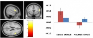 Le cerveau pendant le porno